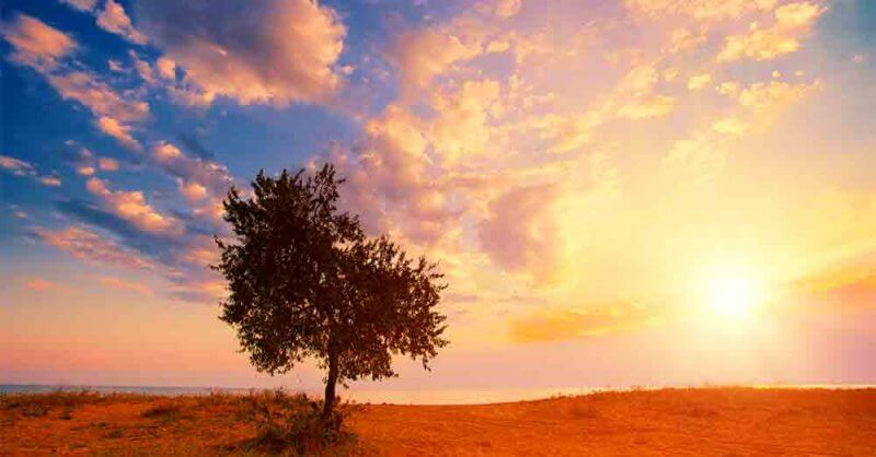 Mighty-Tree-a-daily-devotional-by-Vince-Miller