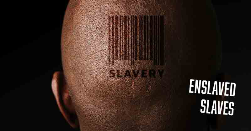 Slavery and freedom in a free daily devotional by Vince Miller