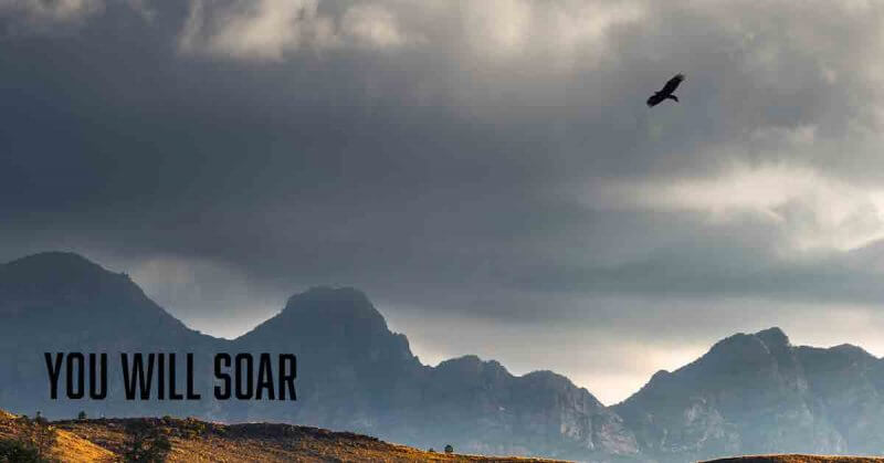You will soar a devotional by Vince Miller